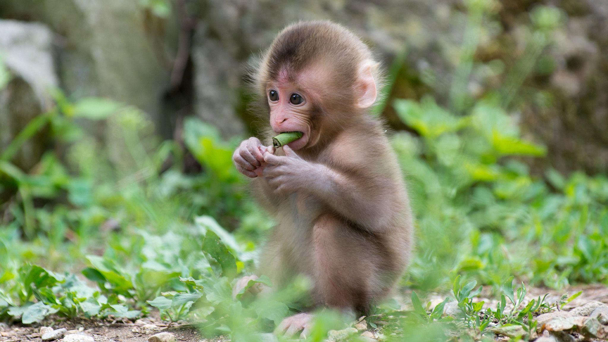 168 Monkey Wallpapers | Monkey Backgrounds