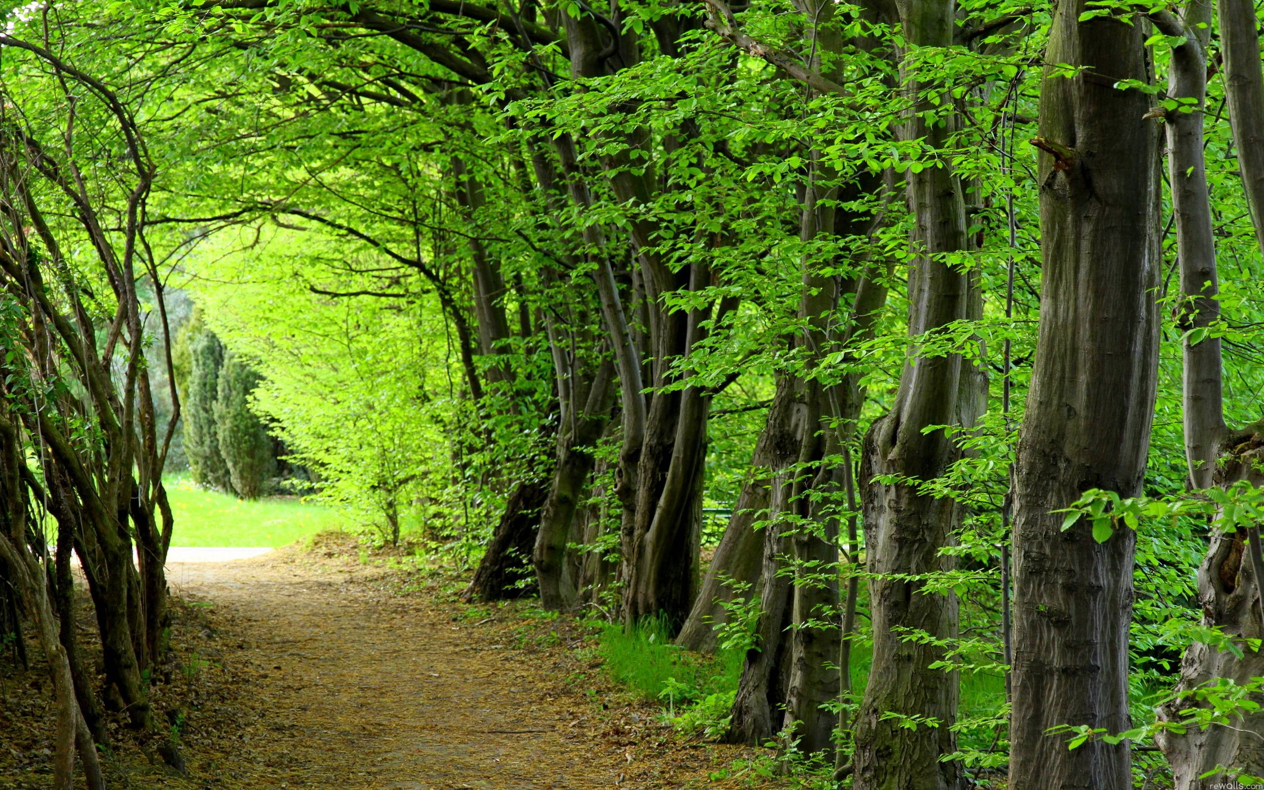 download wallpaper forest trees nature free desktop wallpaper in