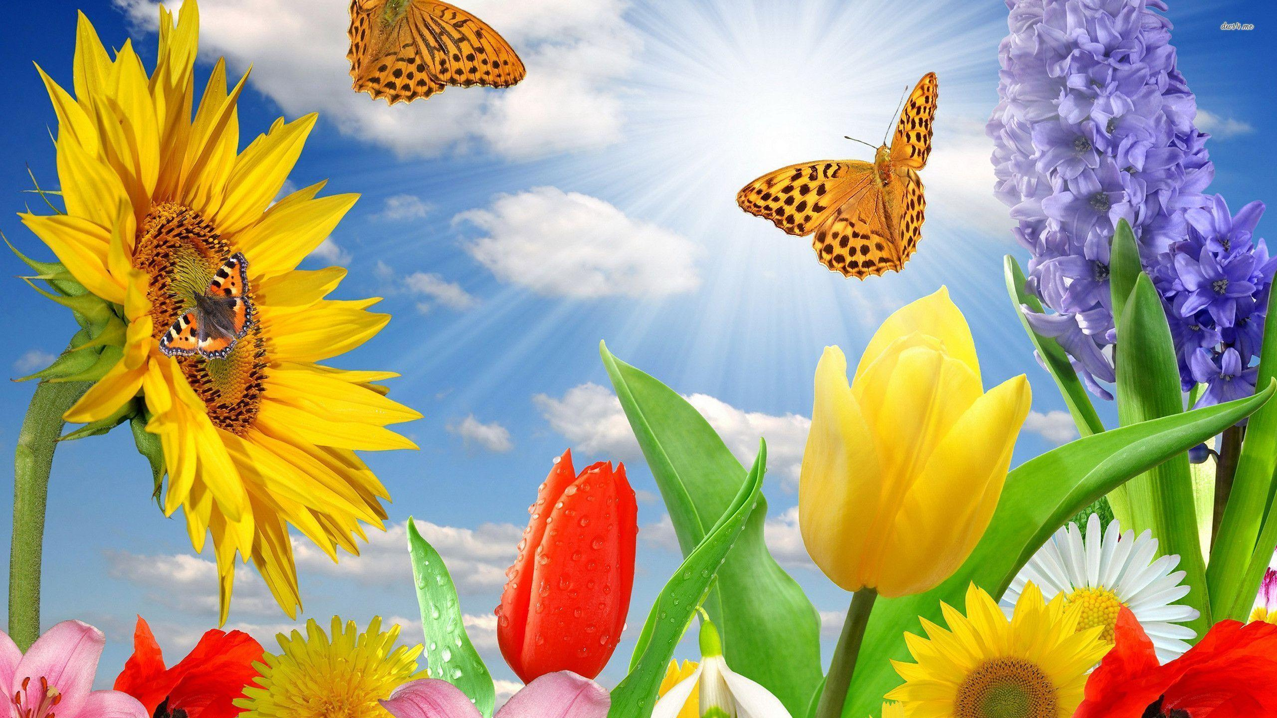 Spring Flowers And Butterflies Backgrounds Widescreen 2 HD