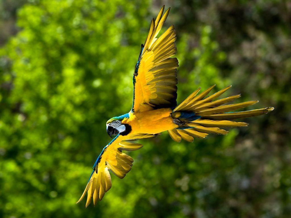 Blue-and-yellow Macaw - cats,parrots and butterflies Wallpaper ...