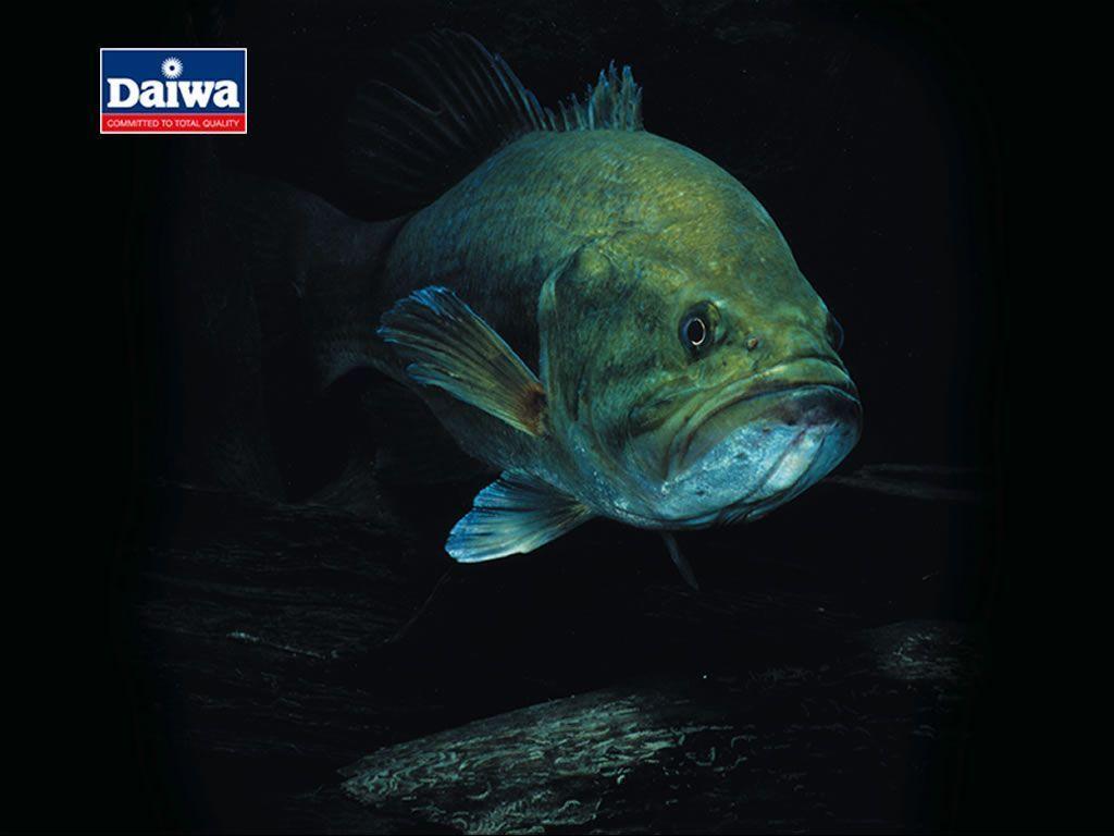 bass fishing wallpaper backgrounds wallpaper cave