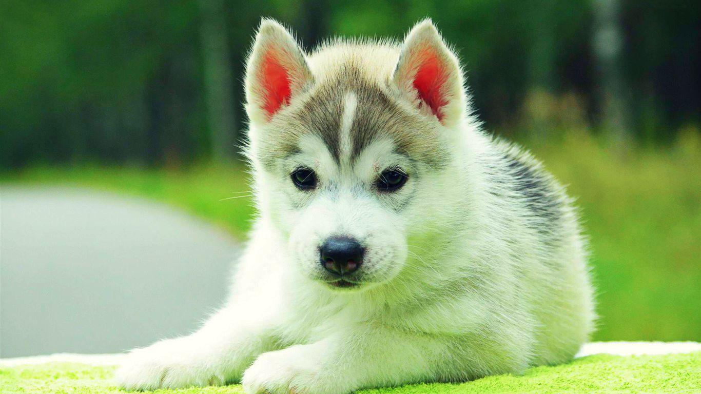 Cute Dog Wallpapers Photos Wallpapers