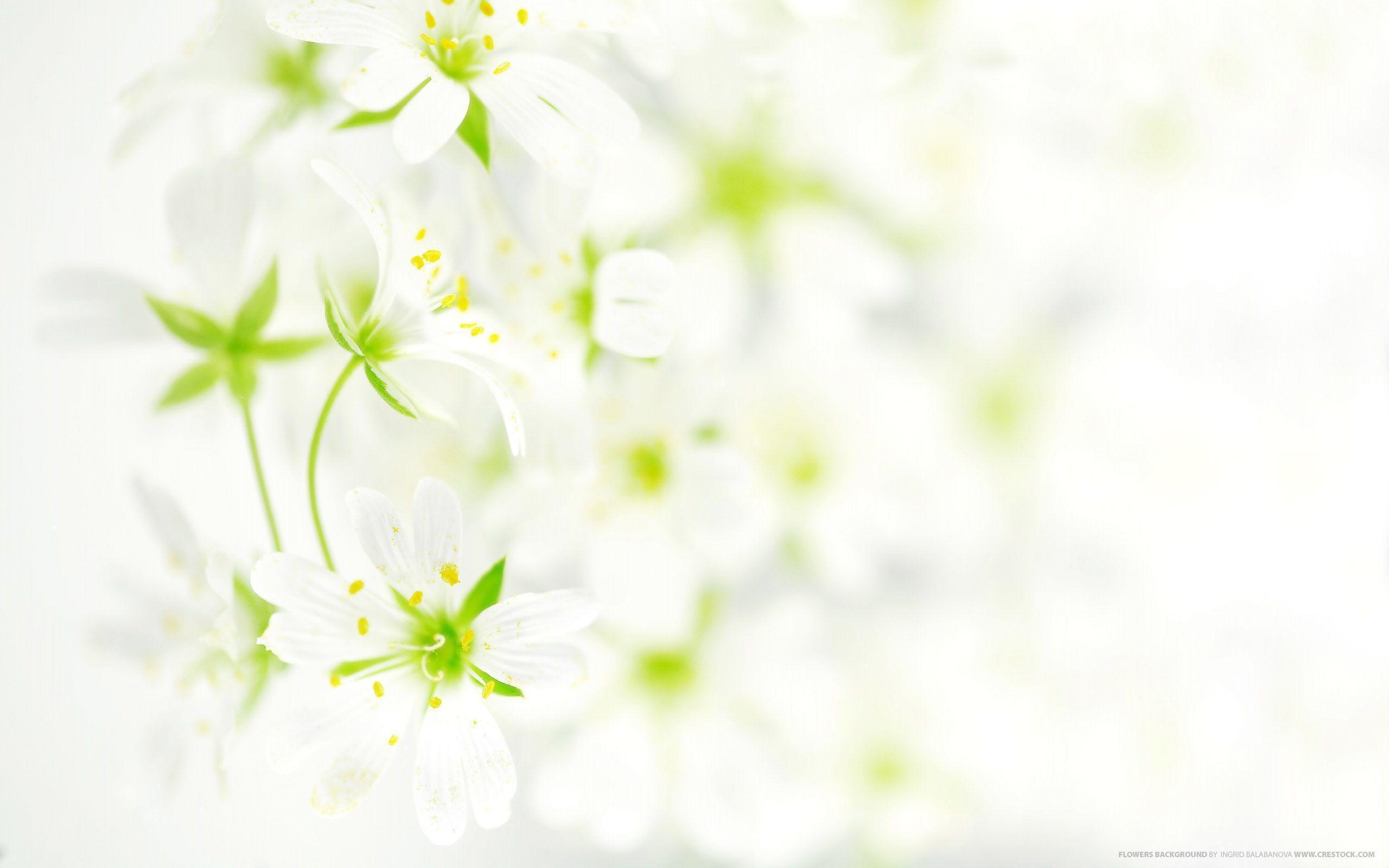 Flower Backgrounds Wallpapers Wallpaper Cave