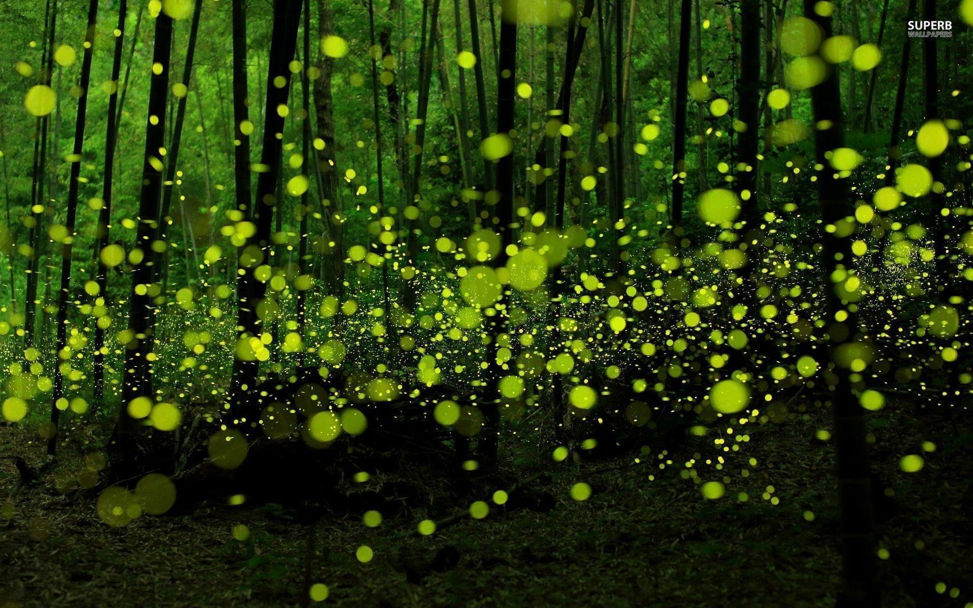 Fireflies Wallpapers - Full HD wallpaper search