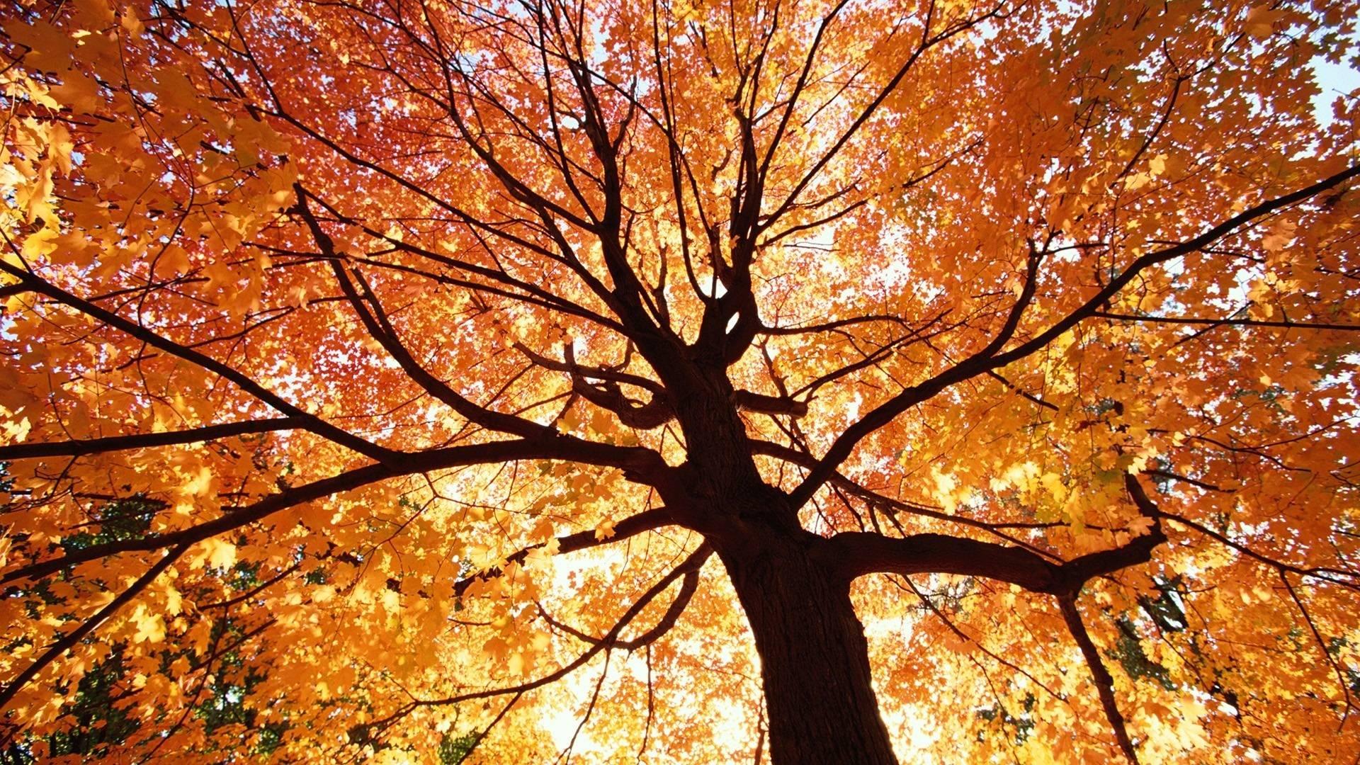 Autumn Trees Wallpaper...