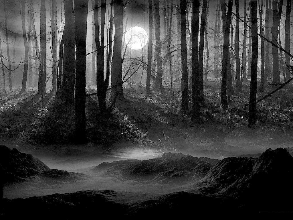 Dark Forest Wallpapers - Wallpaper Cave Dark Forest Wallpapers Widescreen