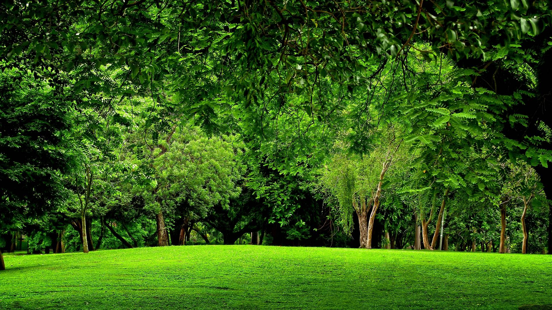 beautiful green forest wallpaper green forest backgrounds wallpaper cave 971