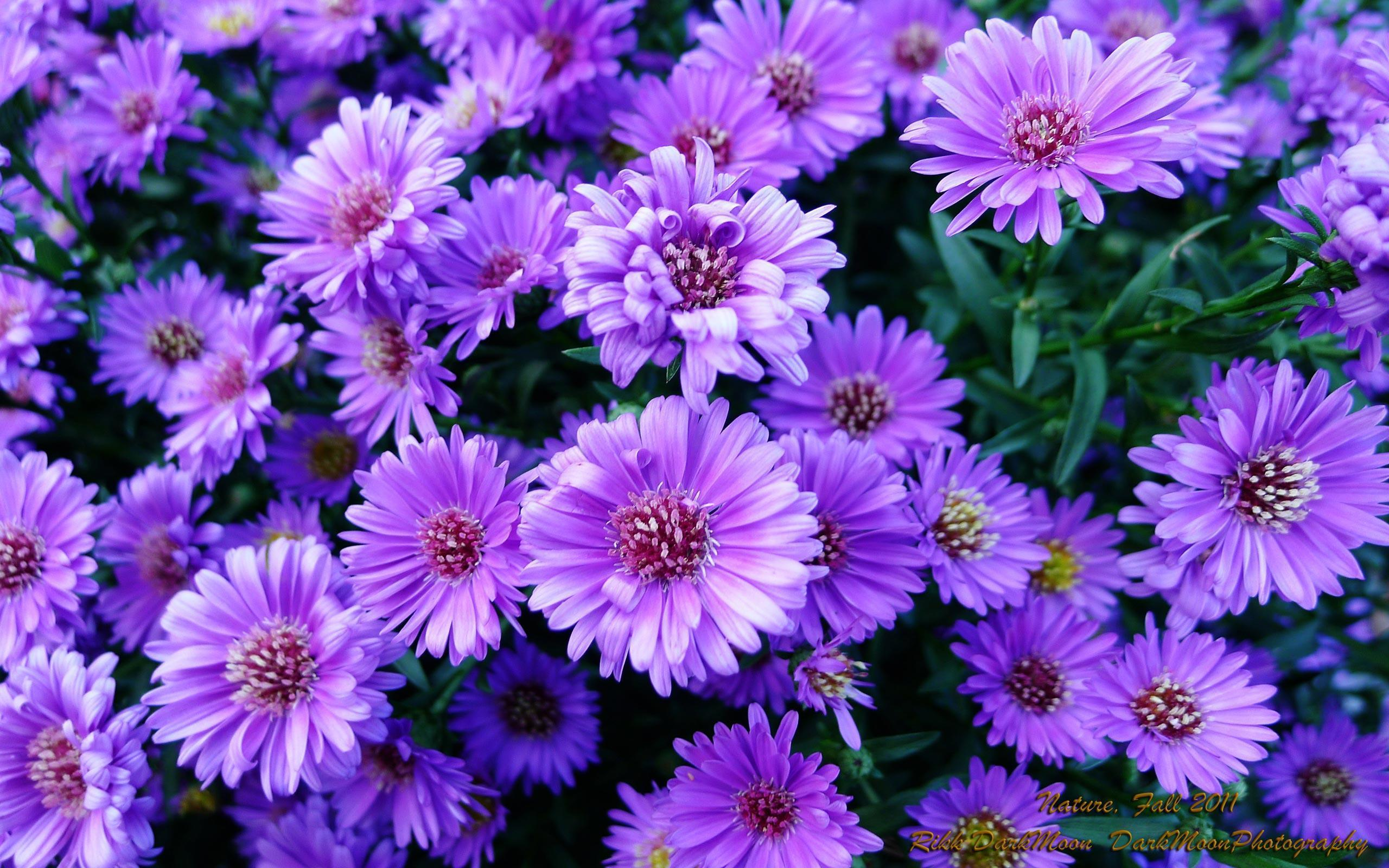 purple flowers wallpapers  wallpaper cave, Beautiful flower