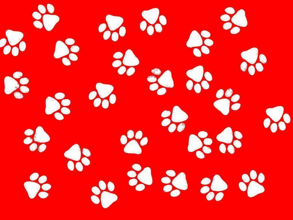 paw print wallpapers wallpaper cave