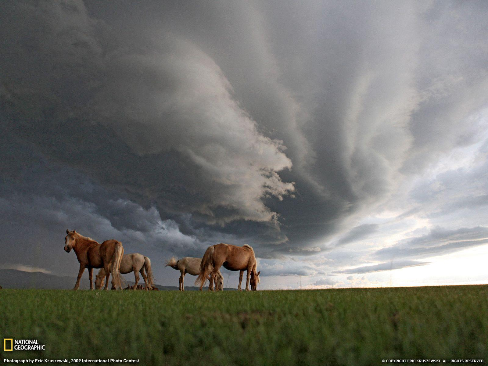 Grazing Horses Photo, Landscape Wallpapers – National Geographic