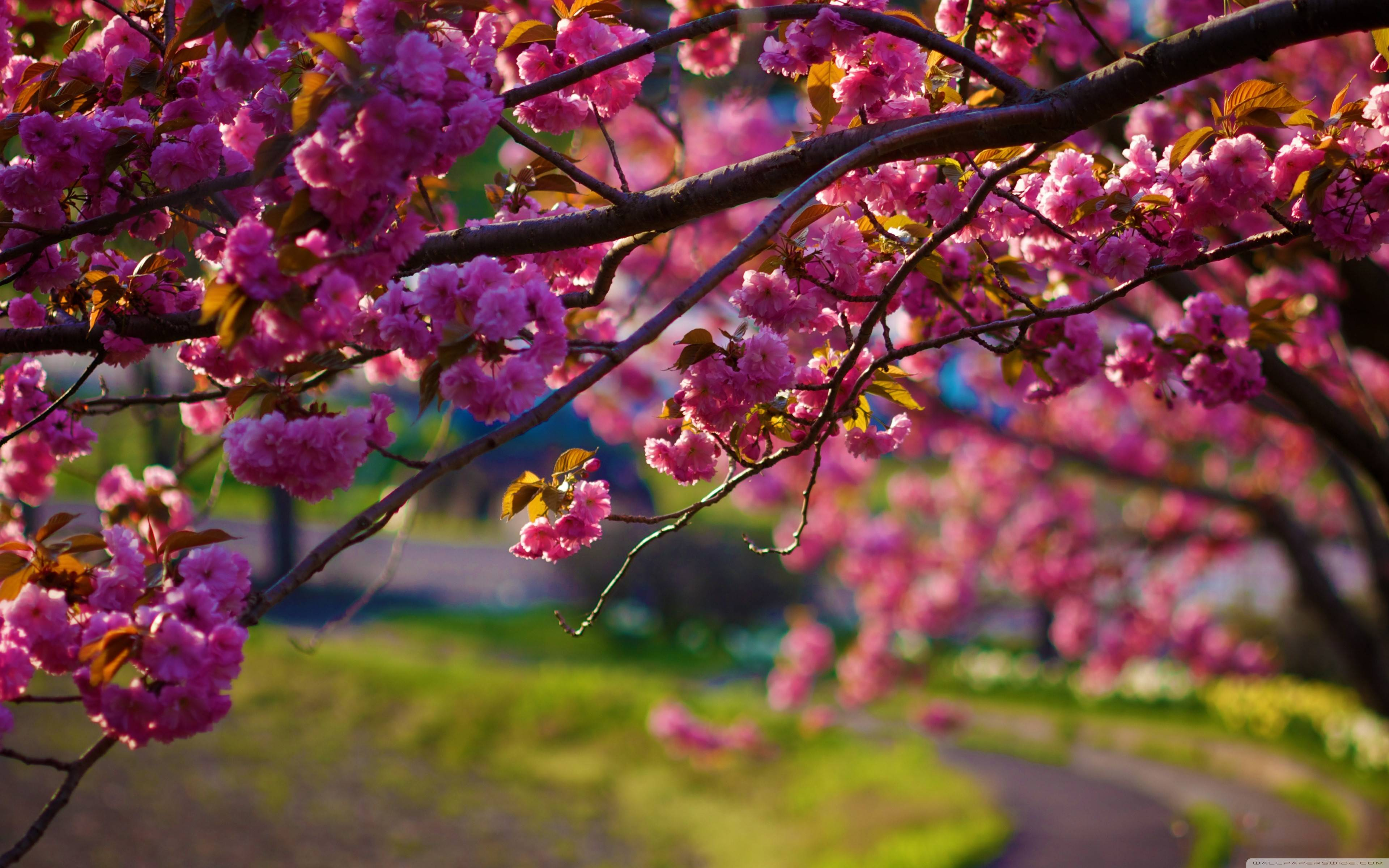 spring nature wallpaper - photo #1
