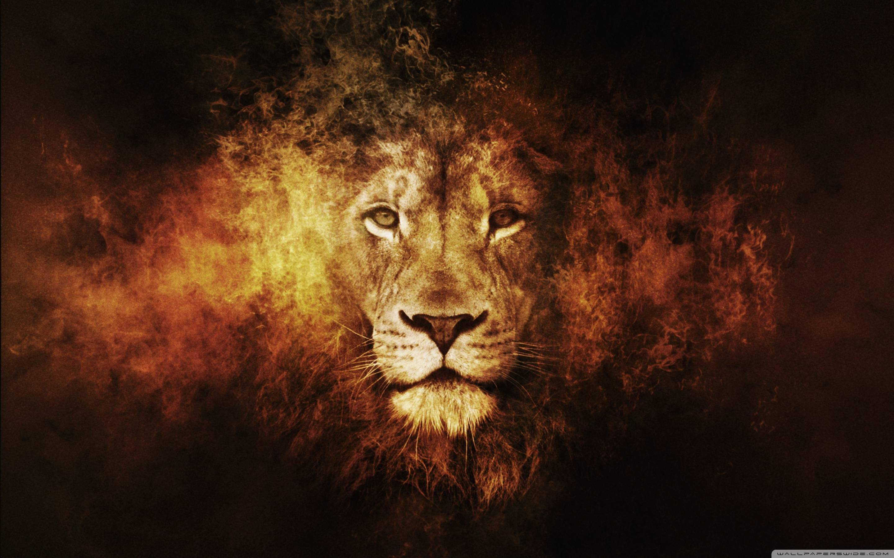 Lion Wallpaper - Full HD wallpaper search
