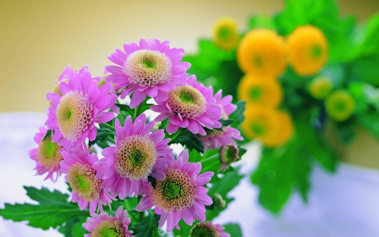light pink flower wallpaper - photo #30