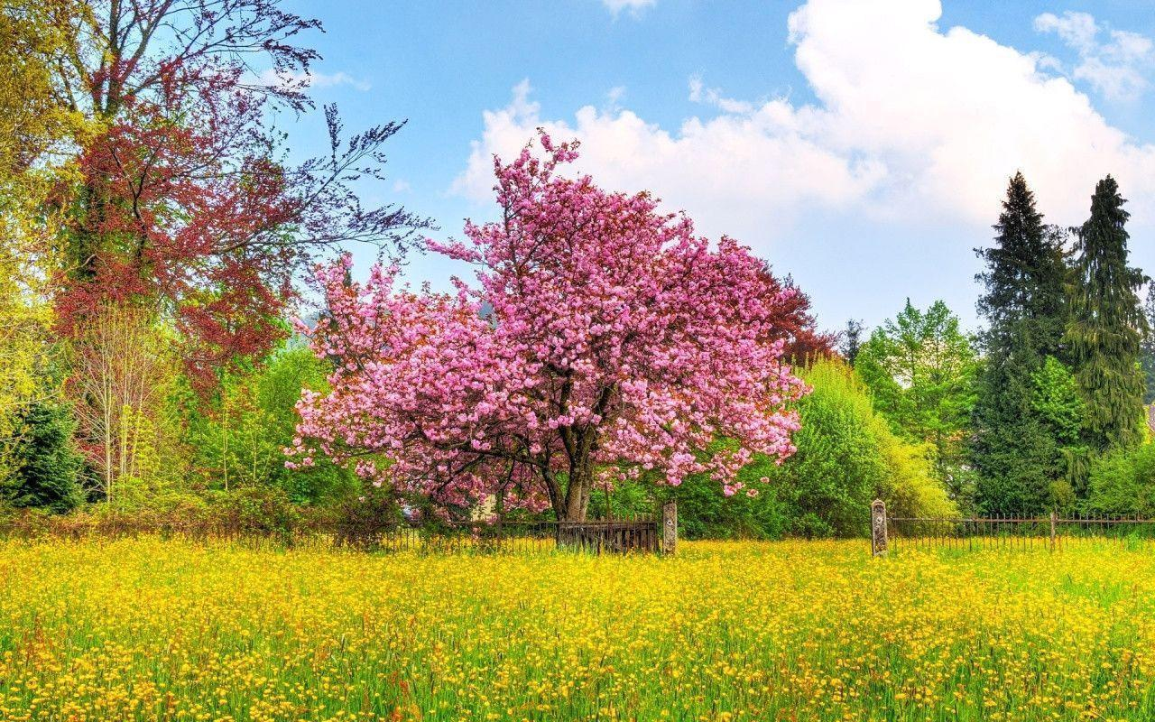 Neat Spring Wallpapers for Desktop Free 1280x800PX ~ Beautiful