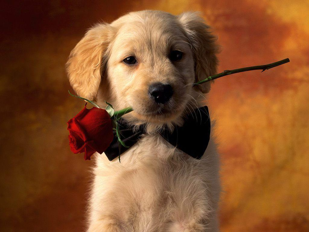 Cute Puppy Wallpaper Free Wallpapers