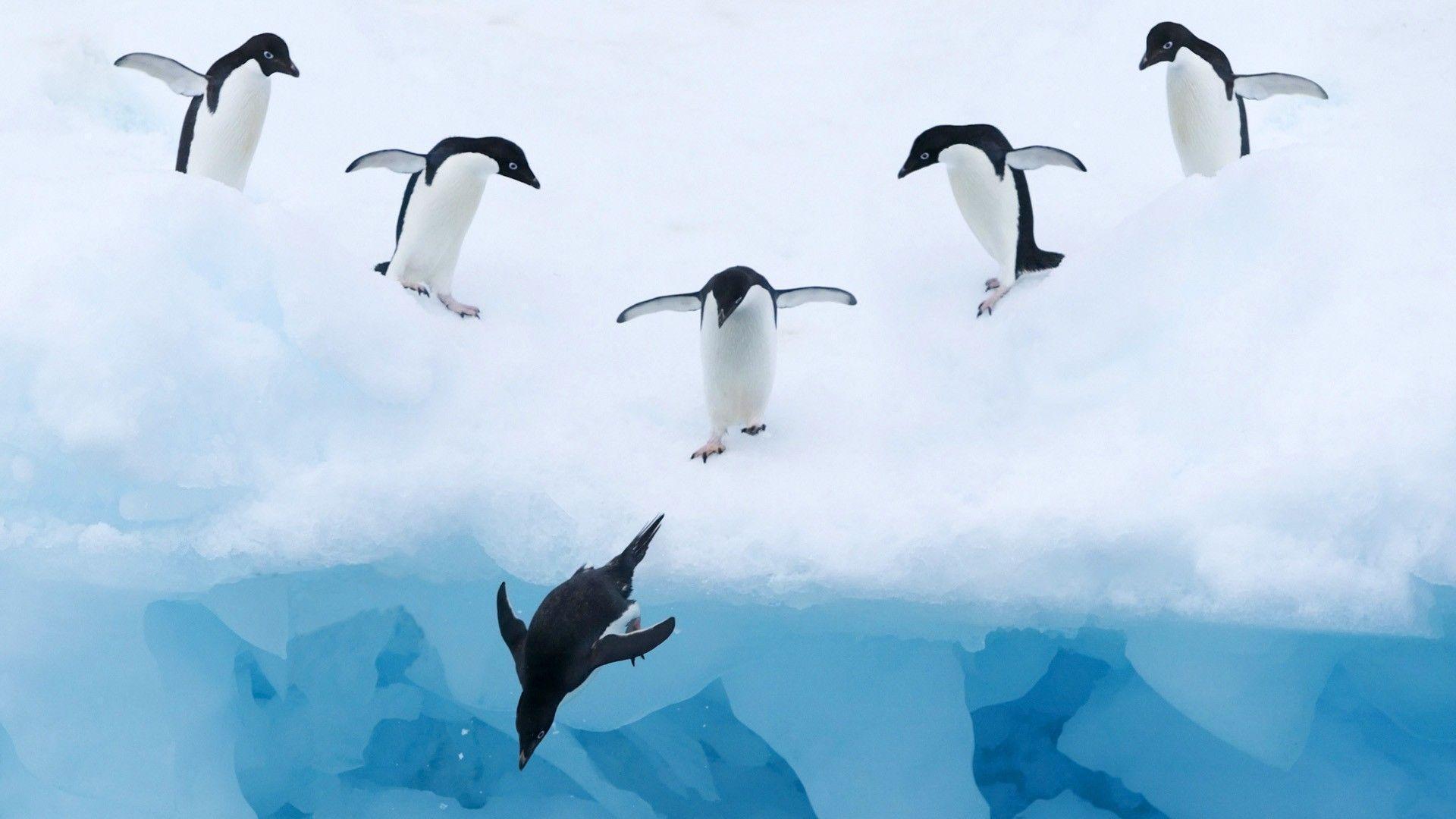 Penguin Wallpapers - Wallpaper Cave