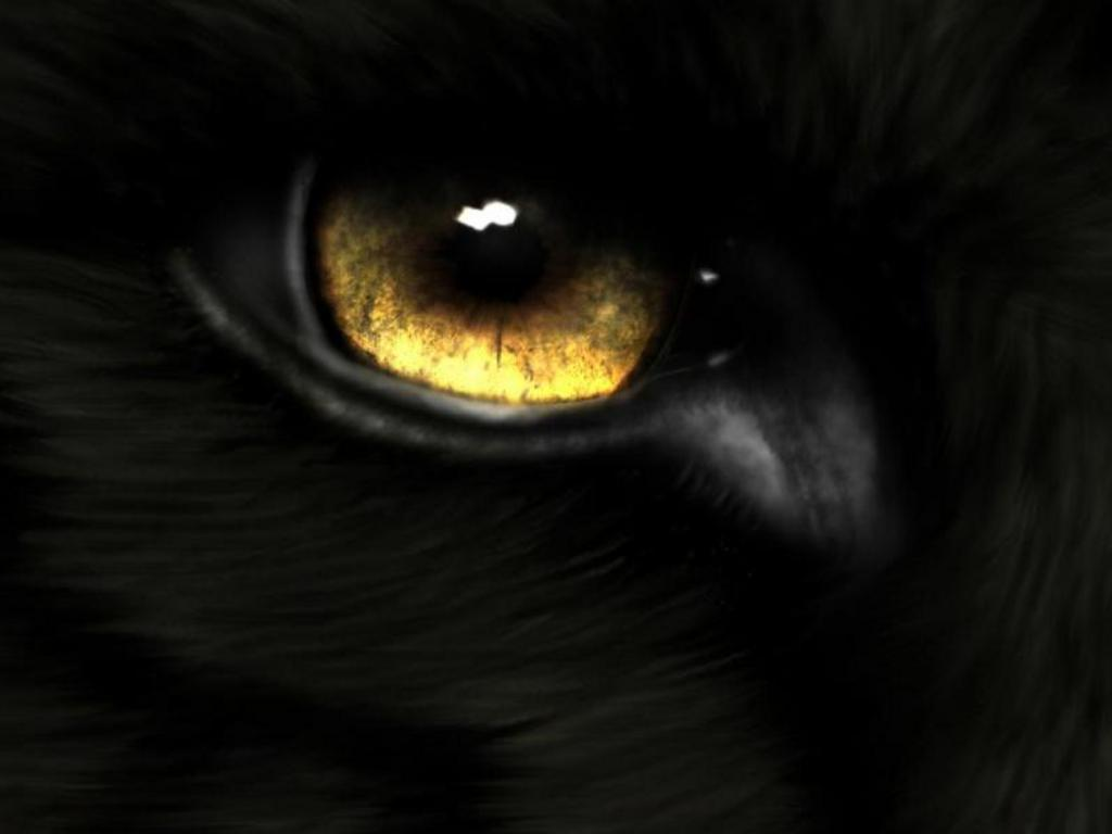 Wallpapers For > Black Wolf Eyes Wallpapers