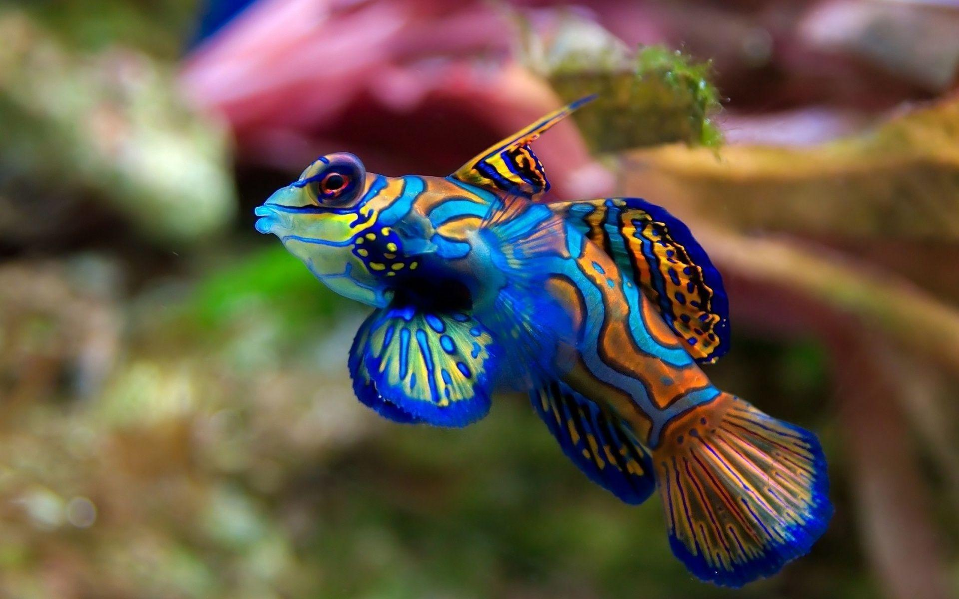 Tropical fish wallpapers hd Backgrounds