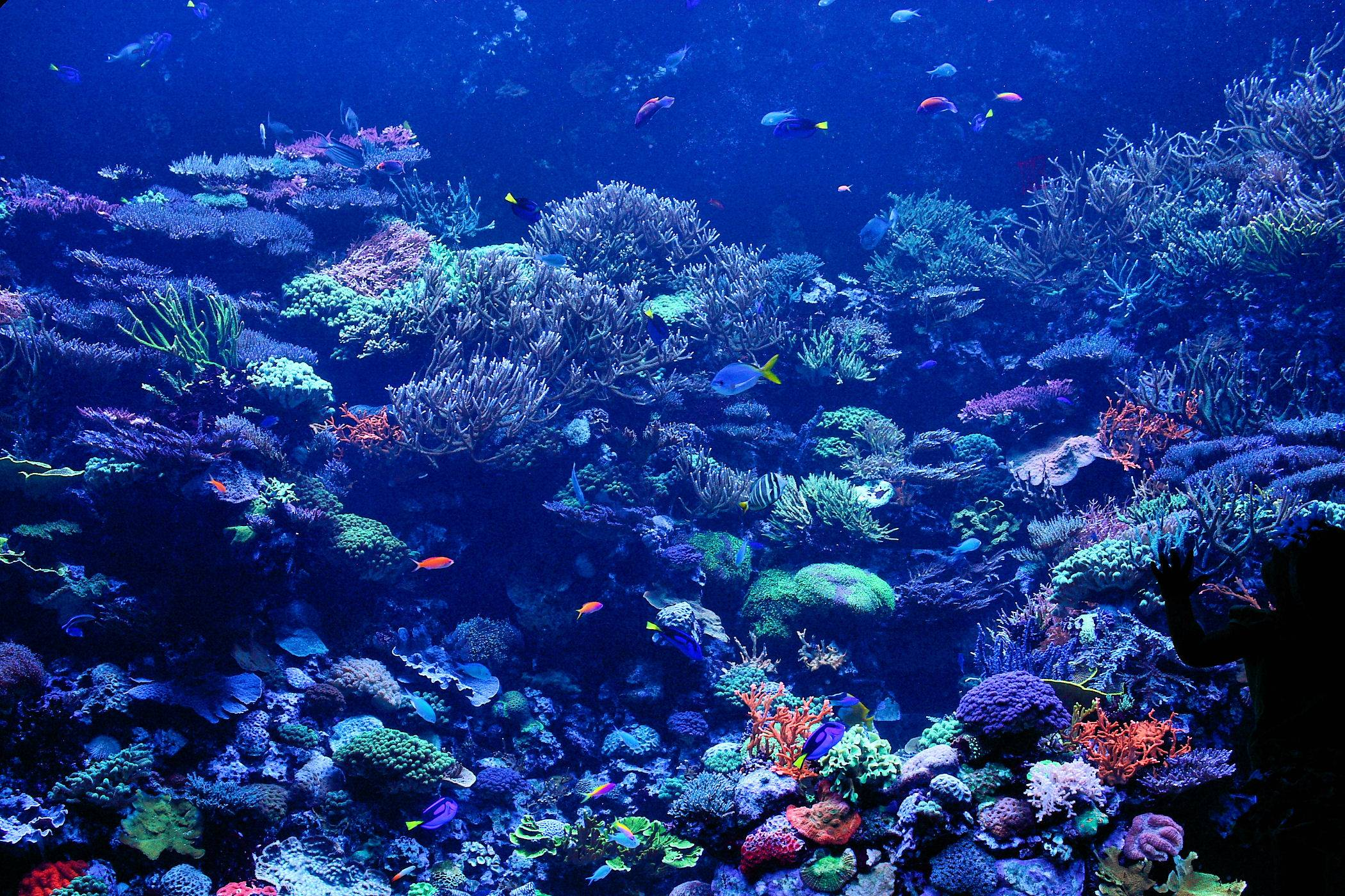 Hd wallpaper cave - Hd Coral Reef Wallpaper Images Amp Pictures Becuo