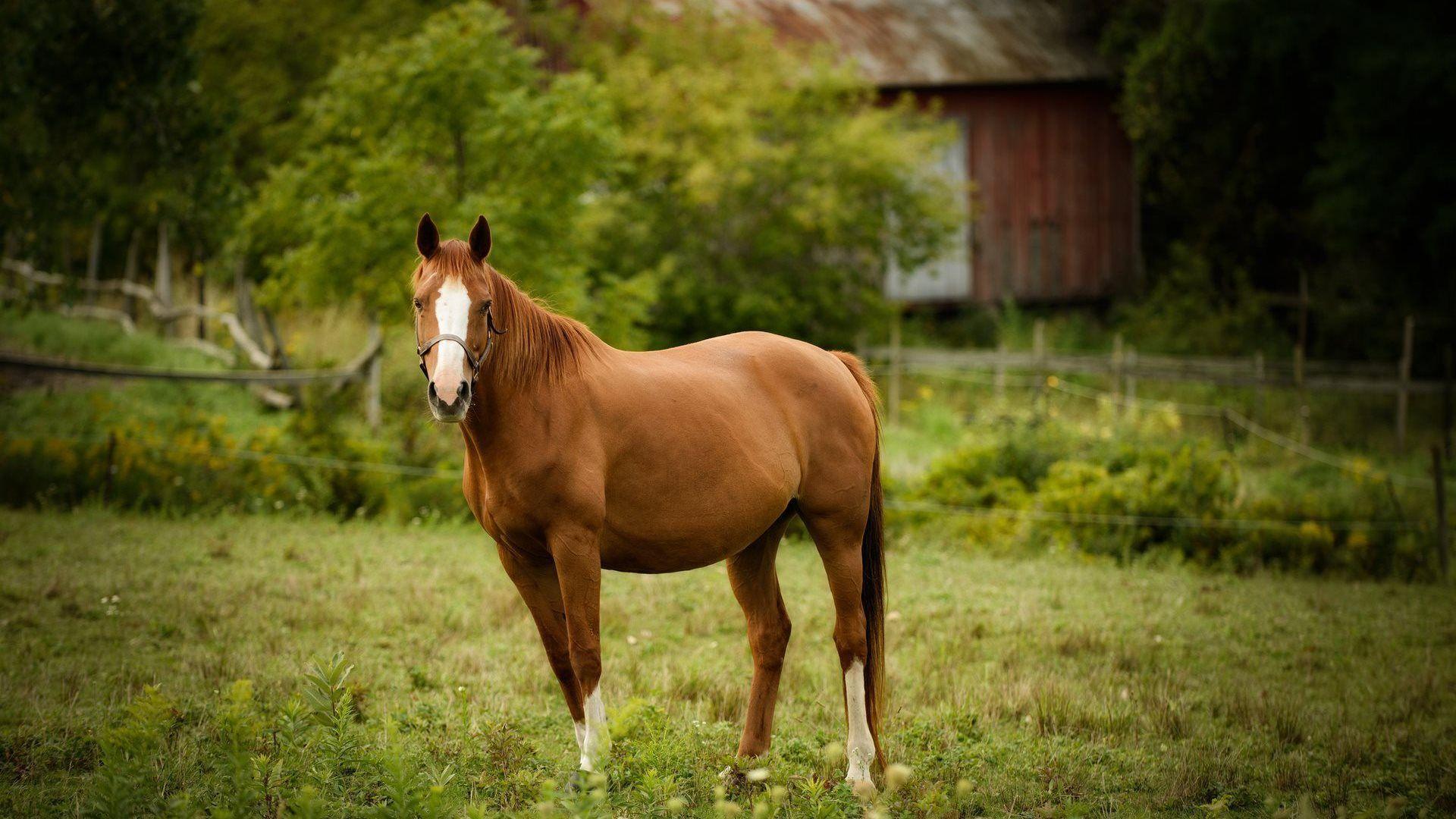 love horses pasture wallpaper - photo #5