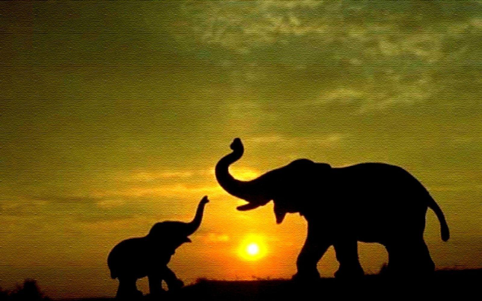 Elephant Wallpaper Art