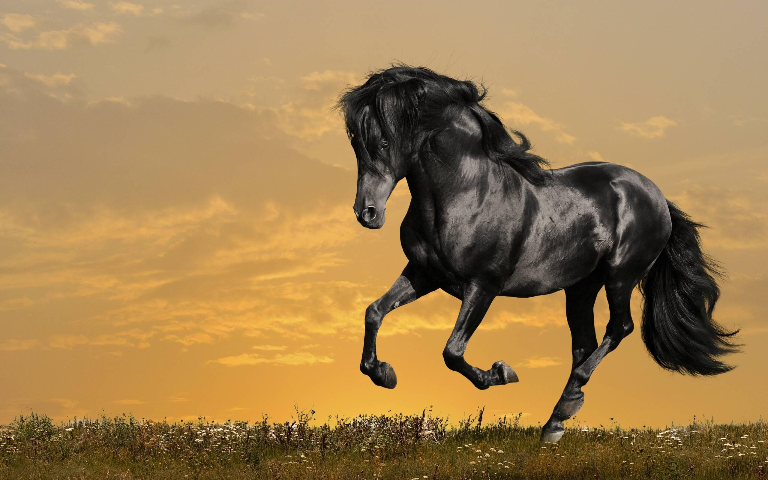 Horse wallpaper - Black Beauty Wallpapers - HD Wallpapers 95774
