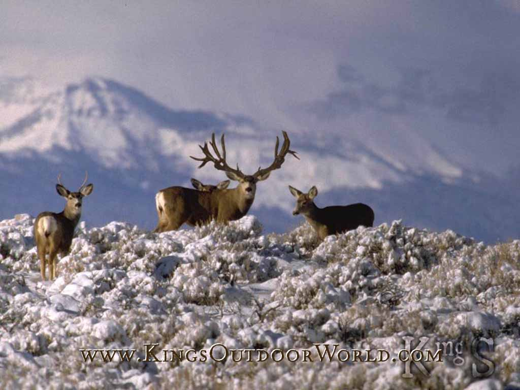image gallery monster mule deer wallpaper