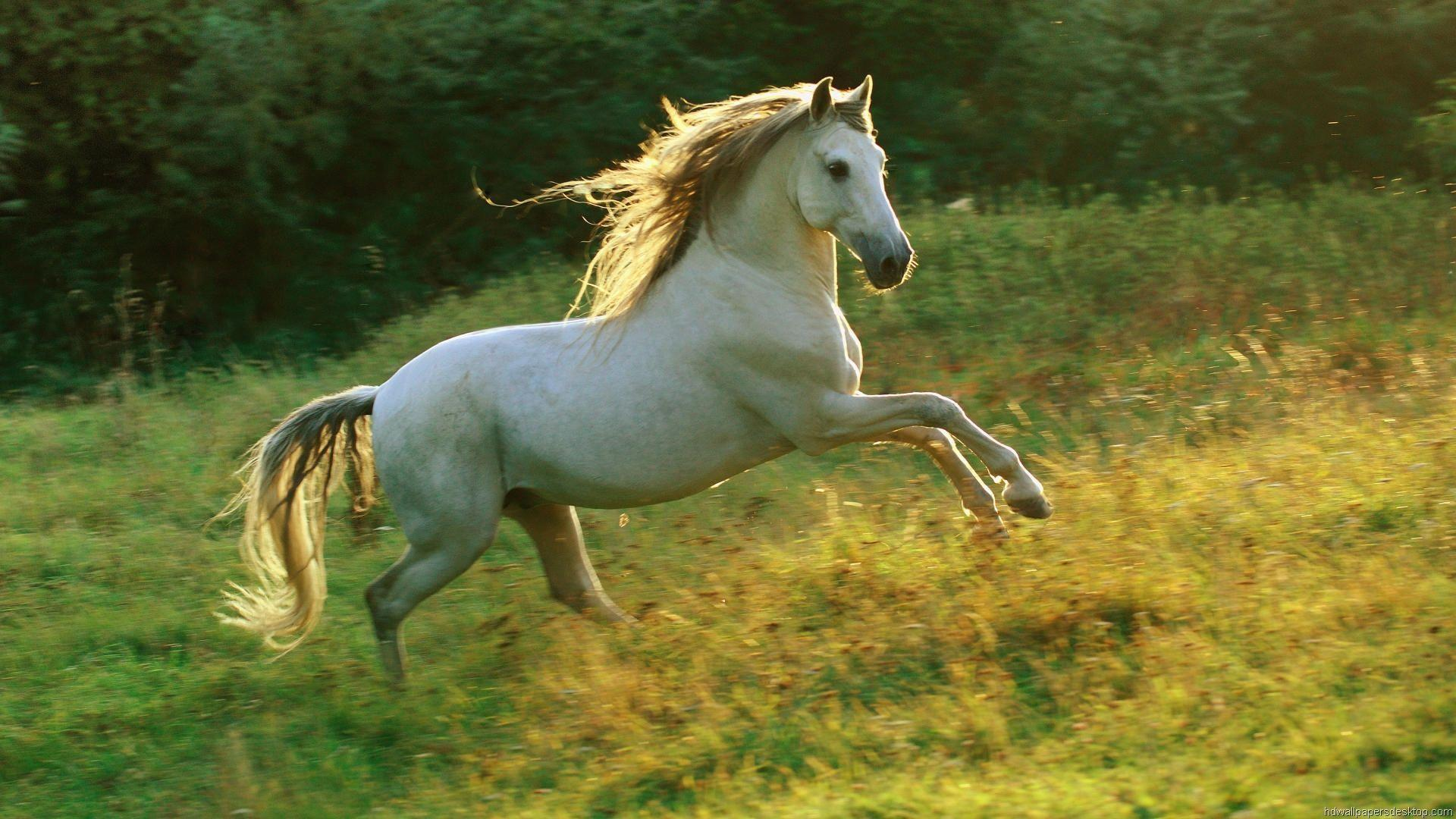 cute horse wallpapers horses background pretty desktop bing andalusian animal really stallion running arabian nature summer