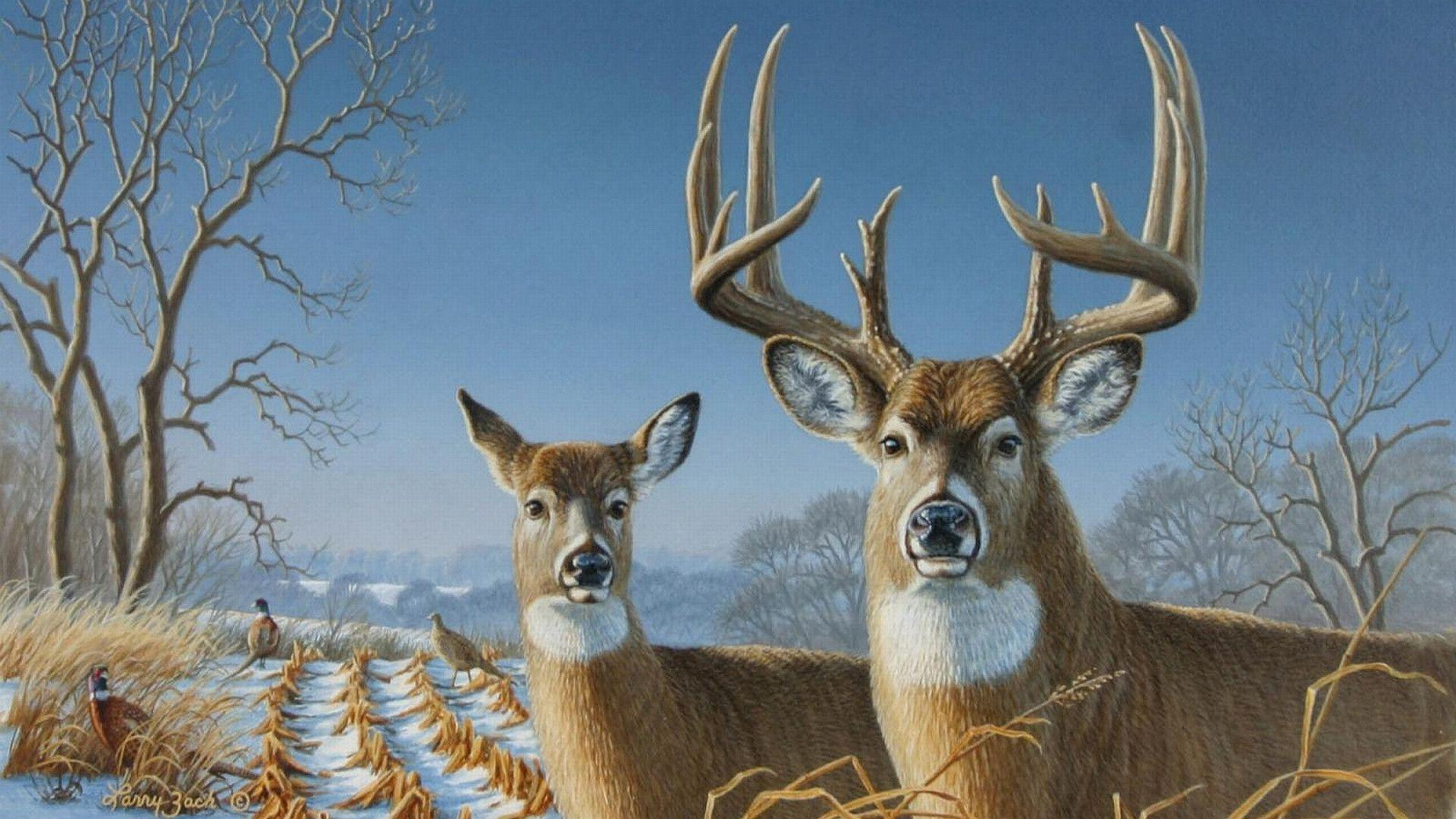 whitetail deer backgrounds wallpaper cave
