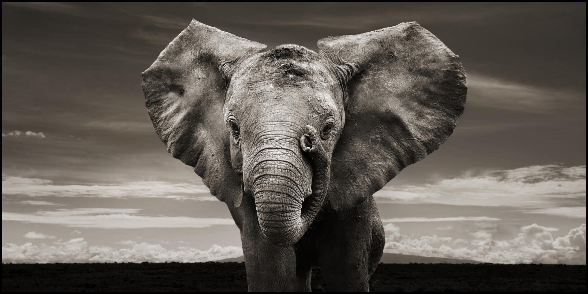 Elephant Computer Wallpapers, Desktop Backgrounds 1920x960 Id: 193044
