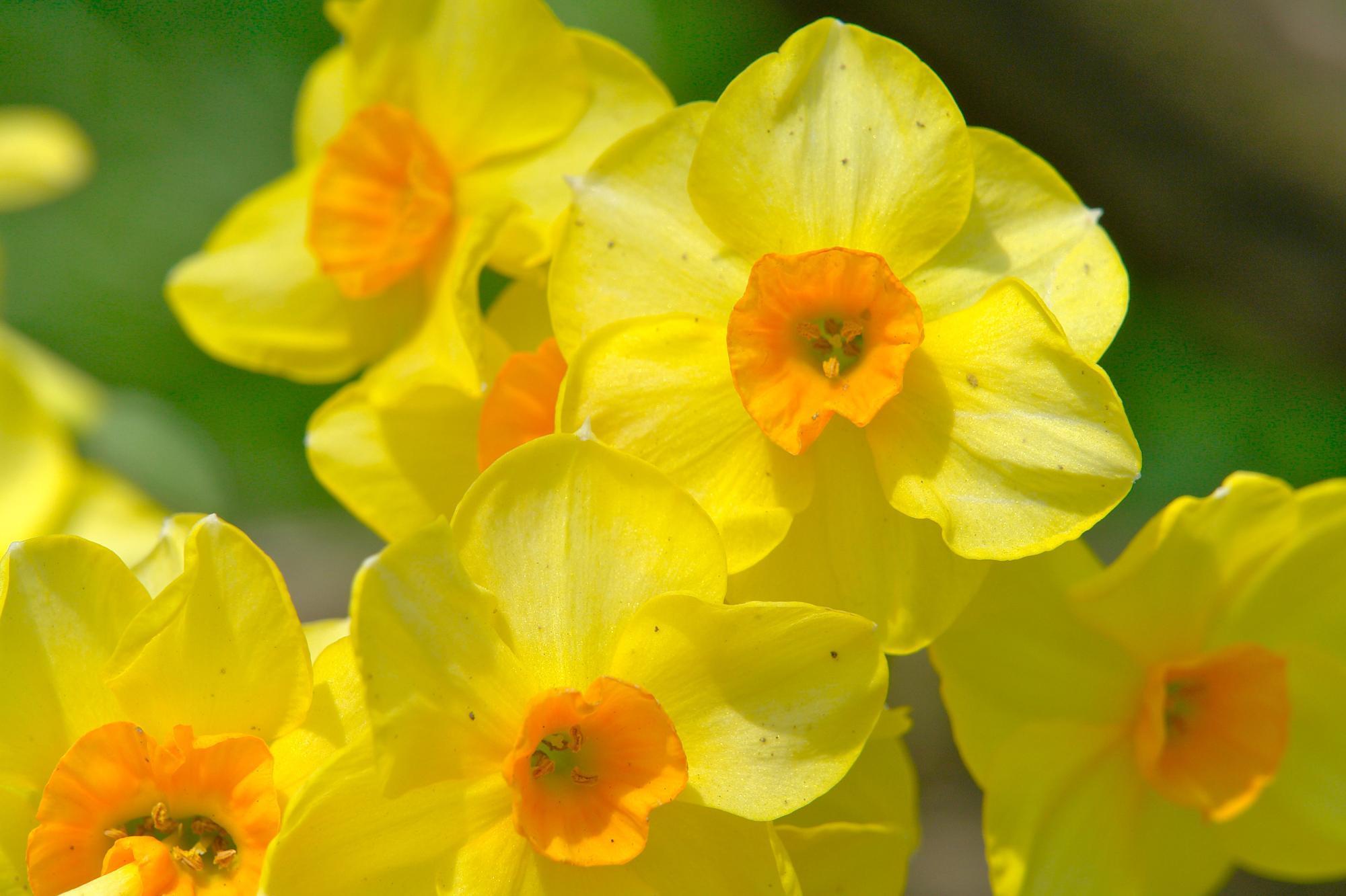 Free Desktop Backgrounds Spring Flowers - HD Nature Wallpaper