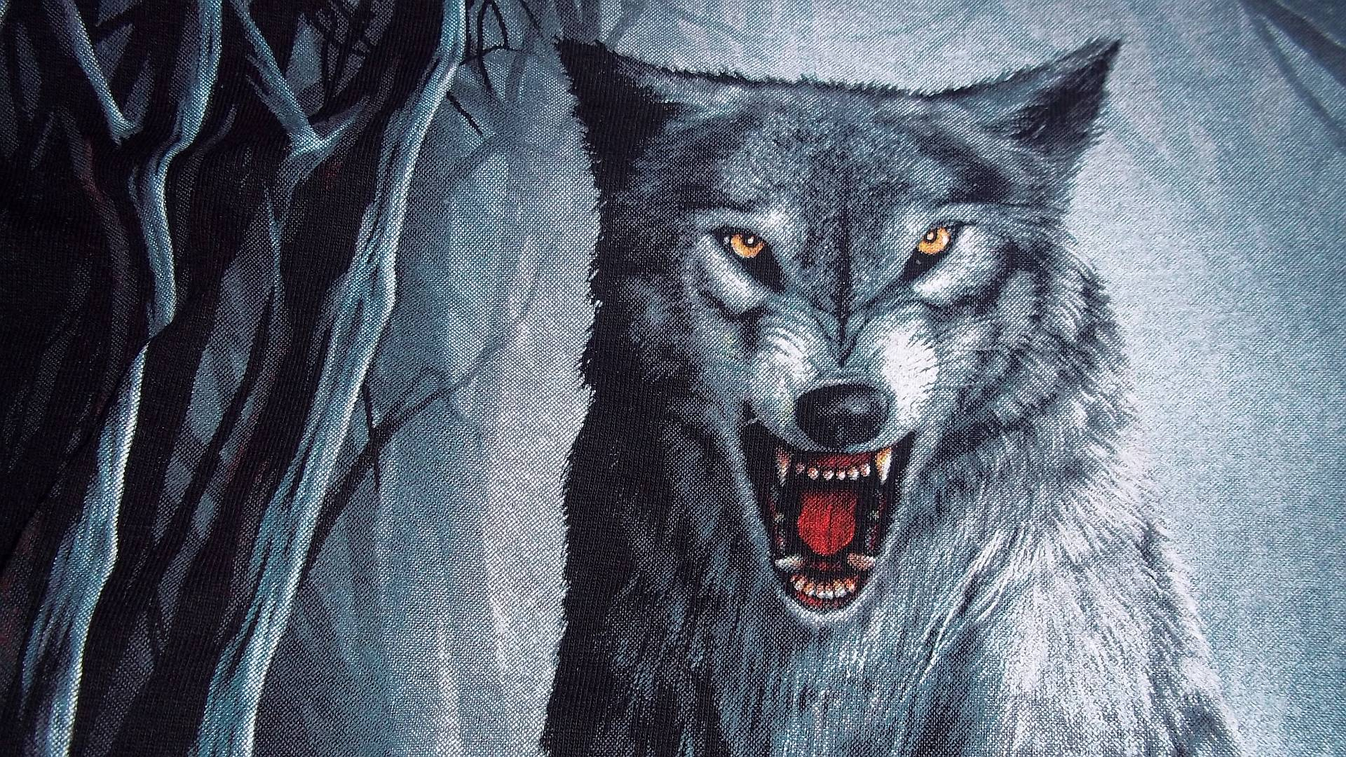 Animal Wolf Wallpaper 1920x1080 px Free Download - Wallpaperest ID ...