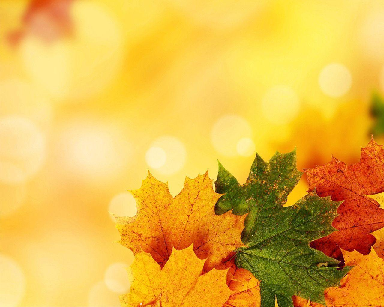 free autumn backgrounds
