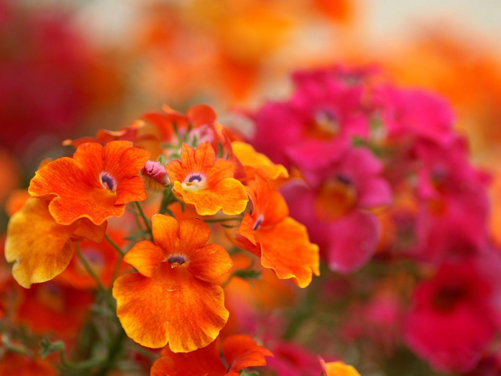 fall flowers wallpaper by - photo #7