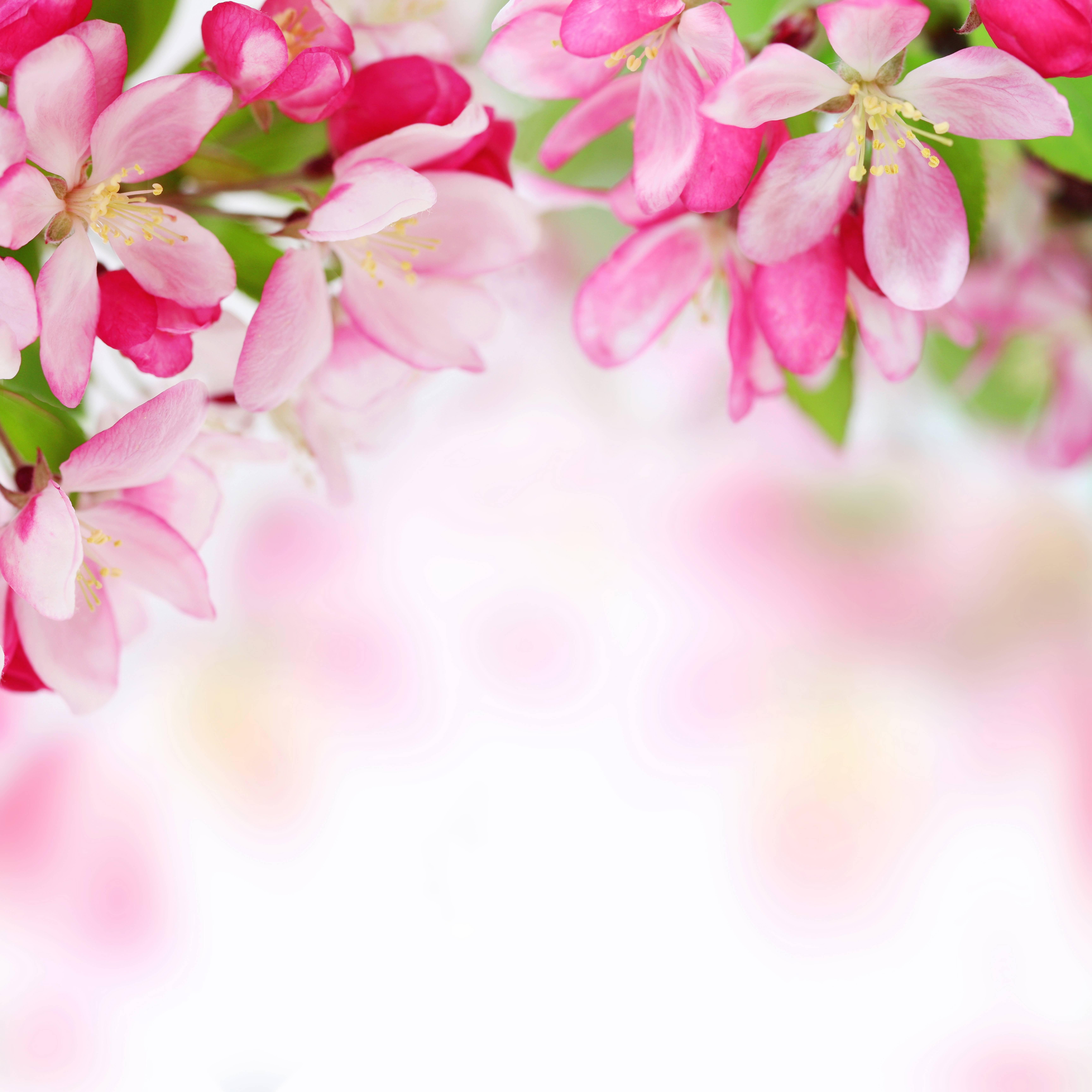spring backgrounds image wallpaper cave