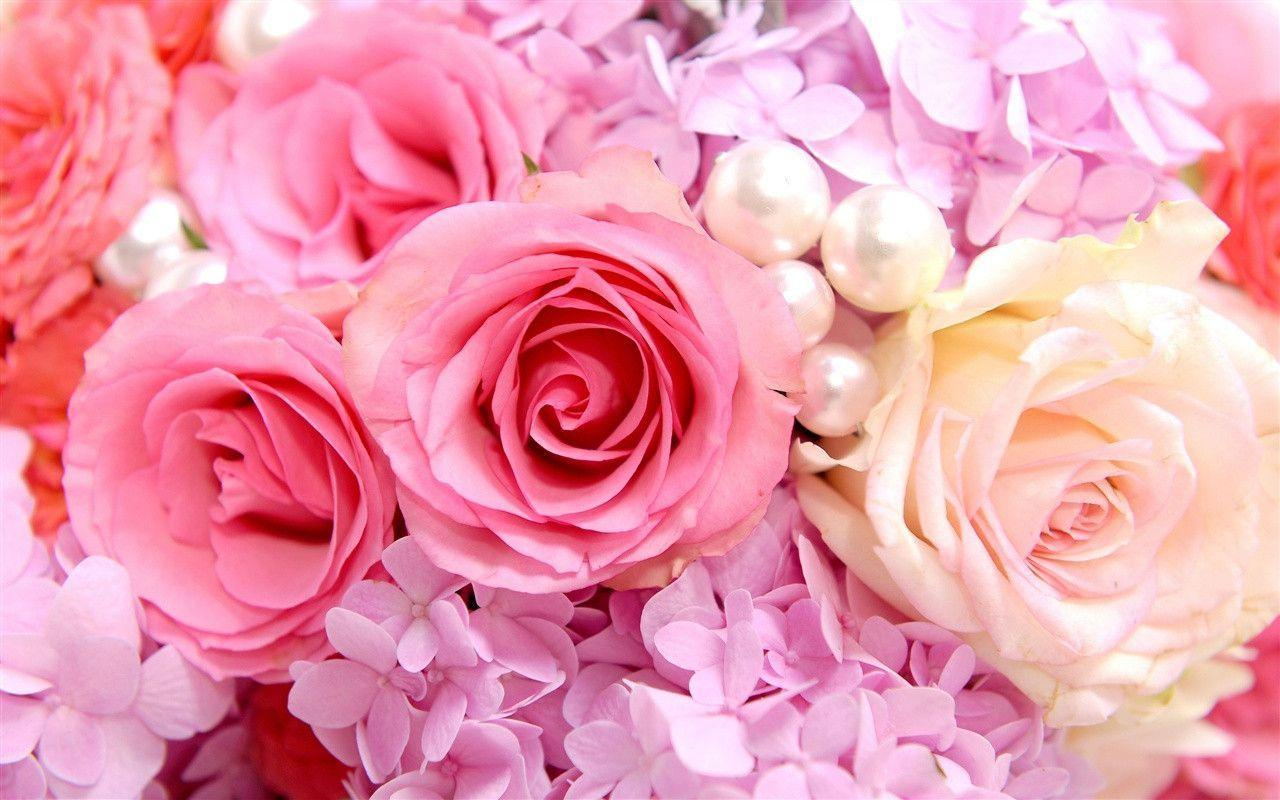 Fondos De Pantalla Rosa: Pink Roses Backgrounds