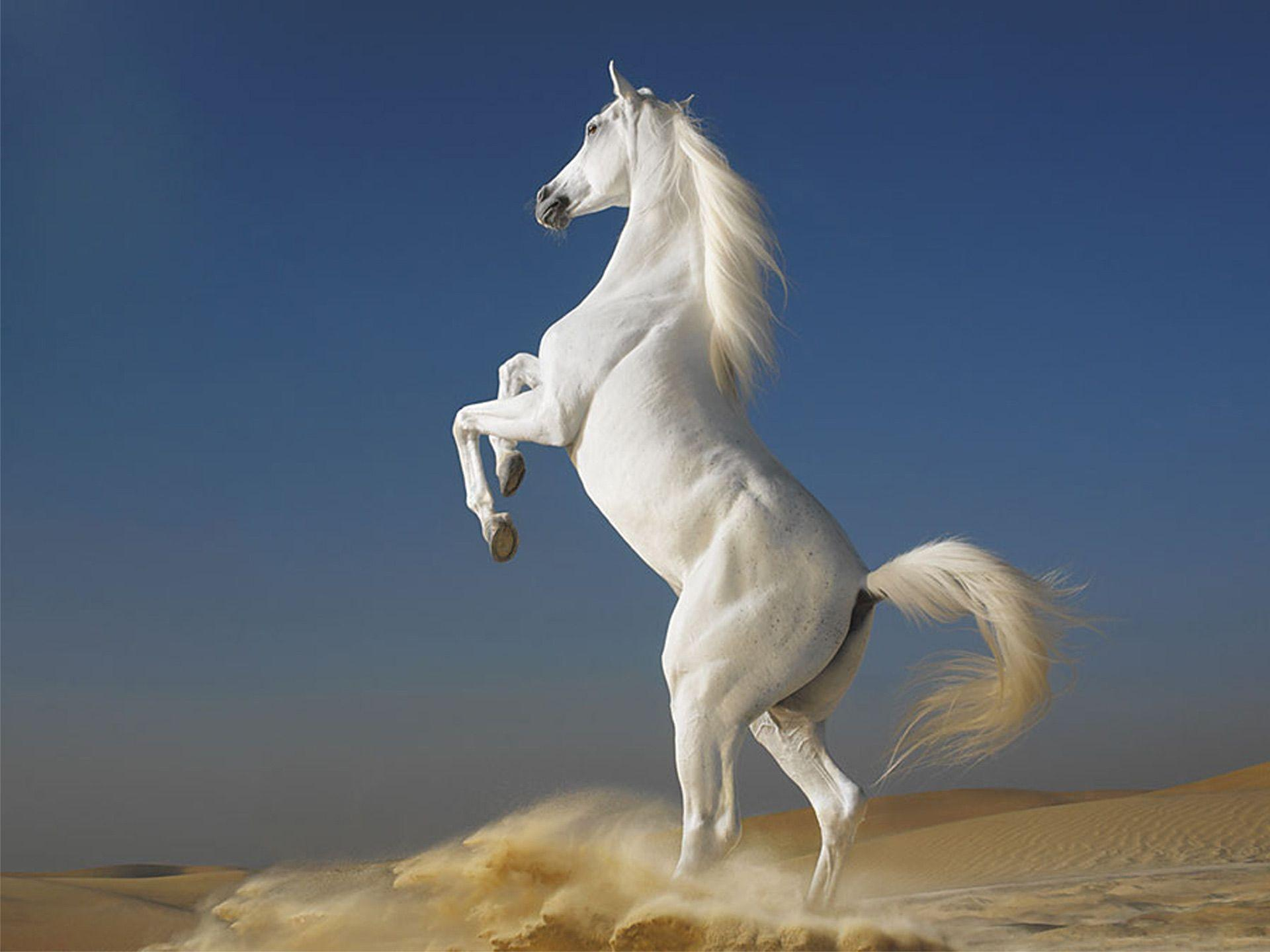 Desktop Wallpaper Gallery Windows 7 White Horse
