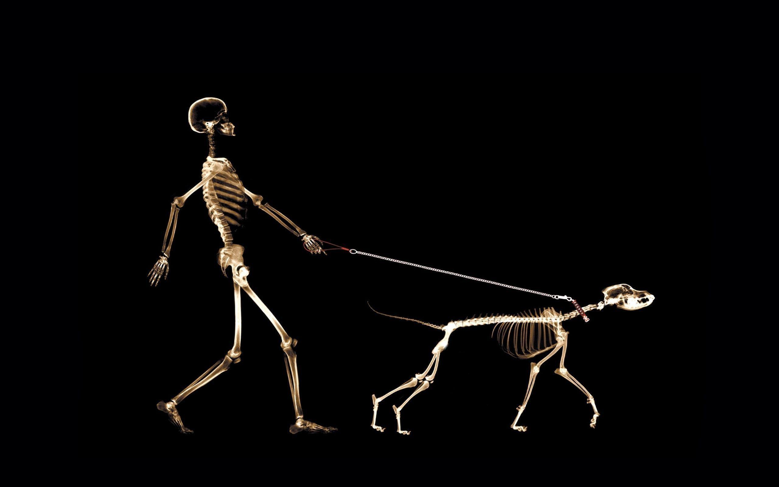 Skeleton Wallpaper 9 |