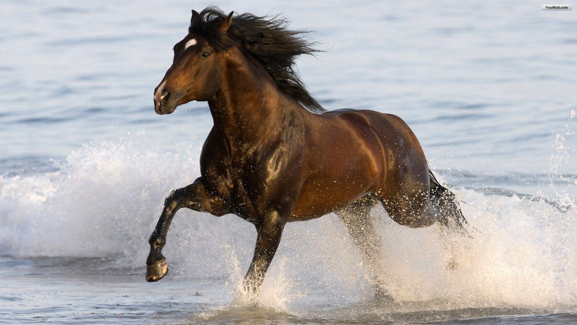 Wallpapers For Black Horse Wallpaper 3d