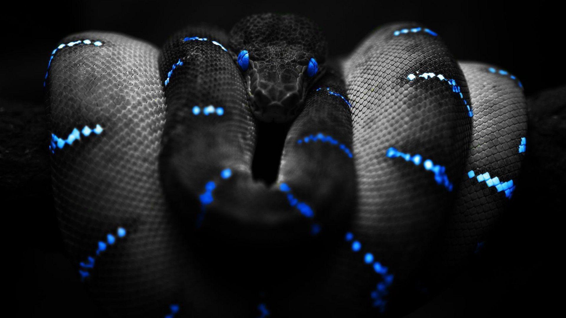 Wallpapers For > Cool Snake Wallpaper