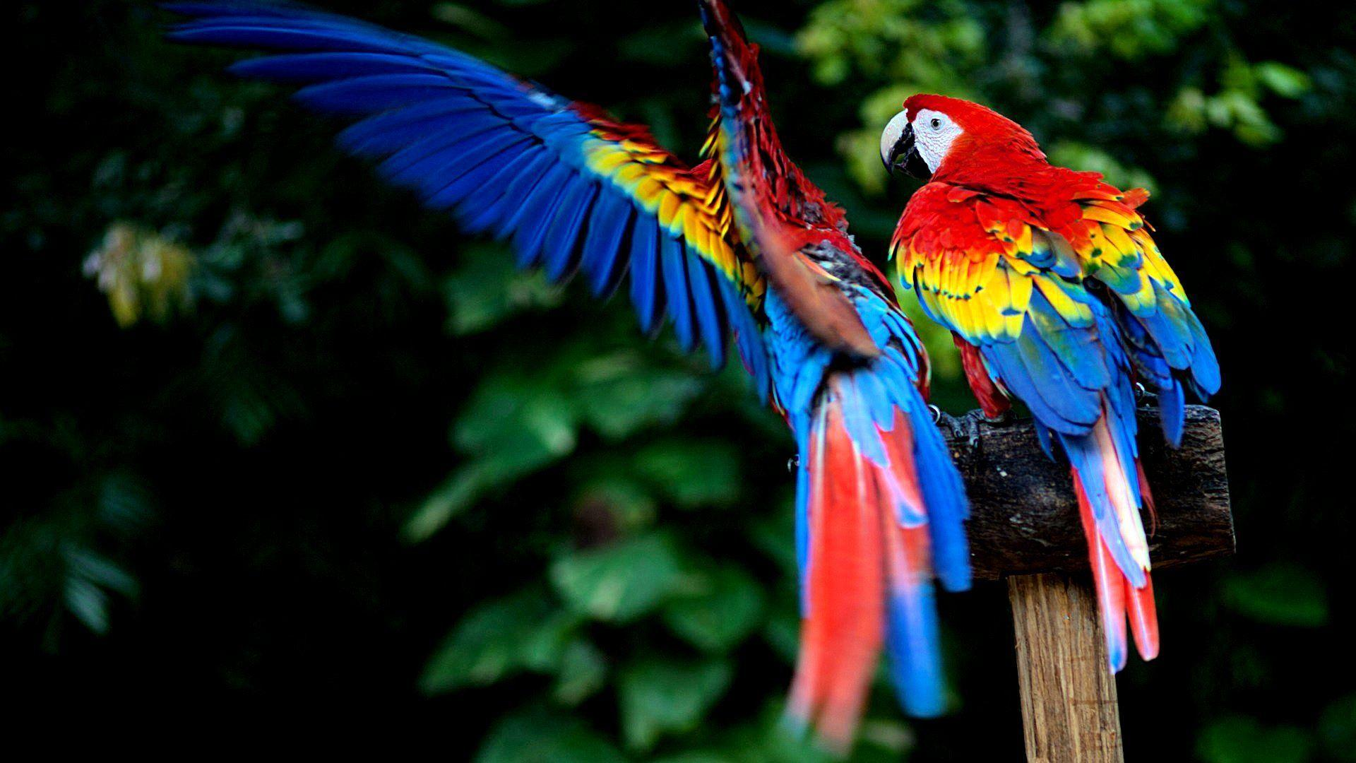 Macaw Wallpaper Wide - HDwallshare.com