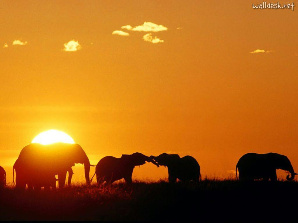 africa_african_elephants_ ...