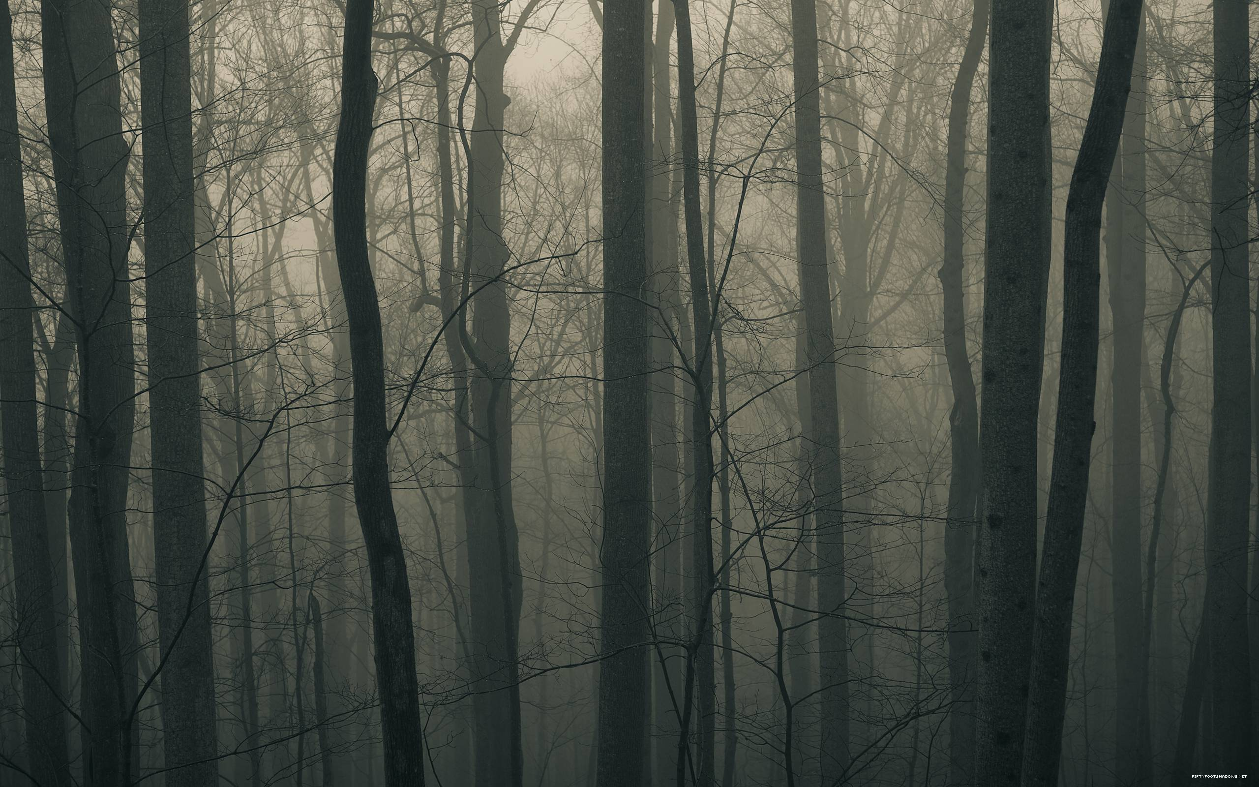 Dark Forest Hq Dark Forest Background Wallpaper 2560x1600