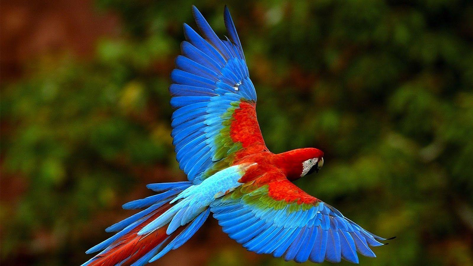 Best Picture of Macaw Parrot 2013 - SA Wallpapers