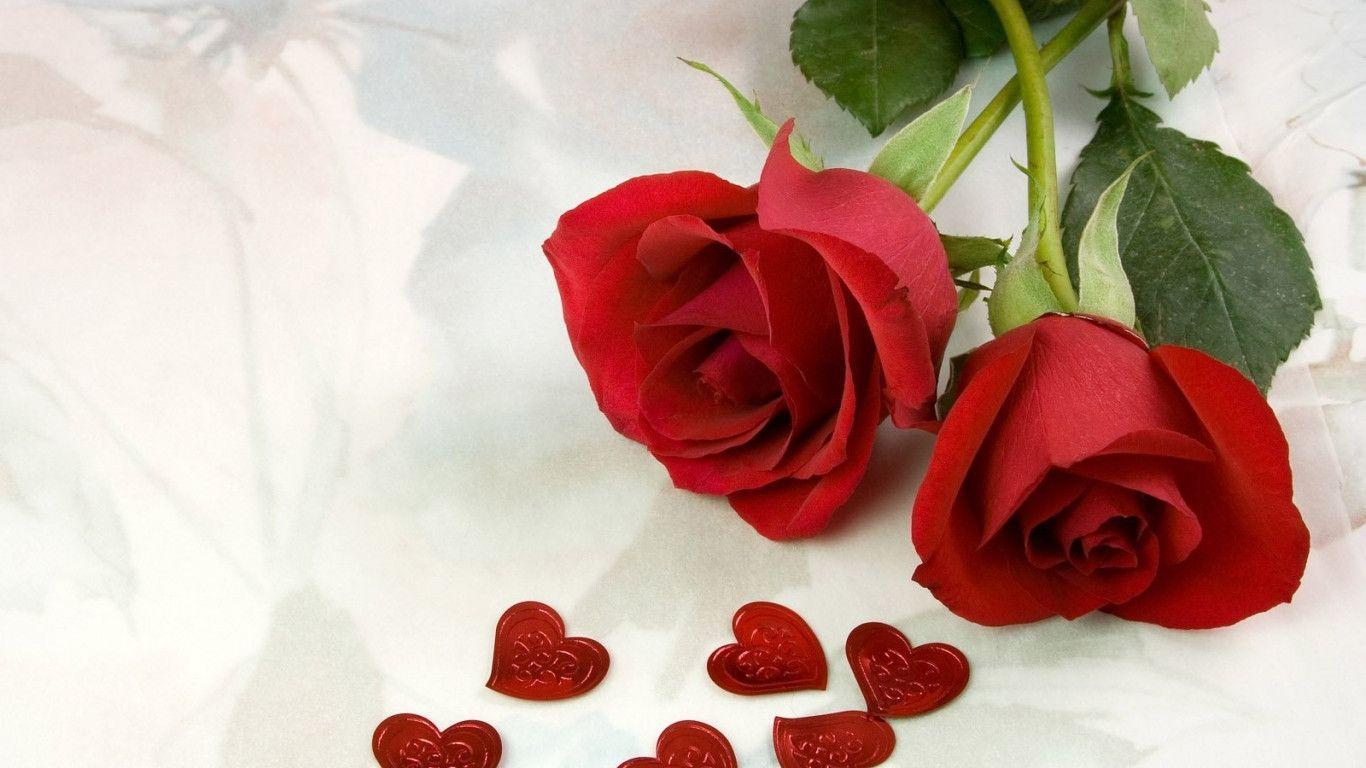Simply A Rose Red Flower Love Hd Wallpaper 16473 Full