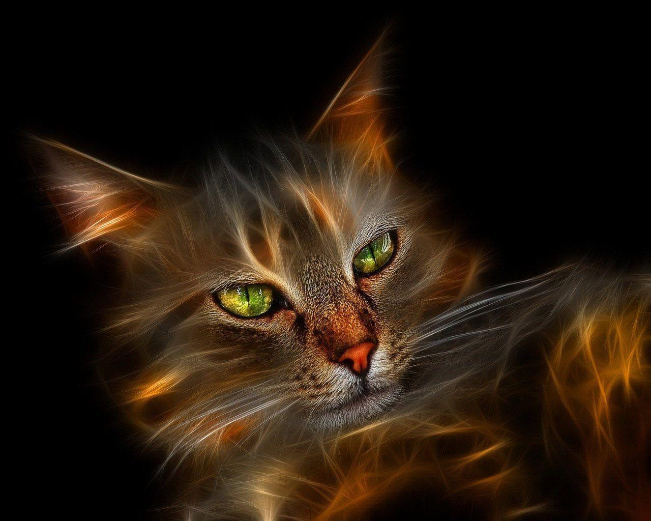 Desktop Wallpapers · Gallery · Windows 7 · Windows 7 Wallpapers Cat