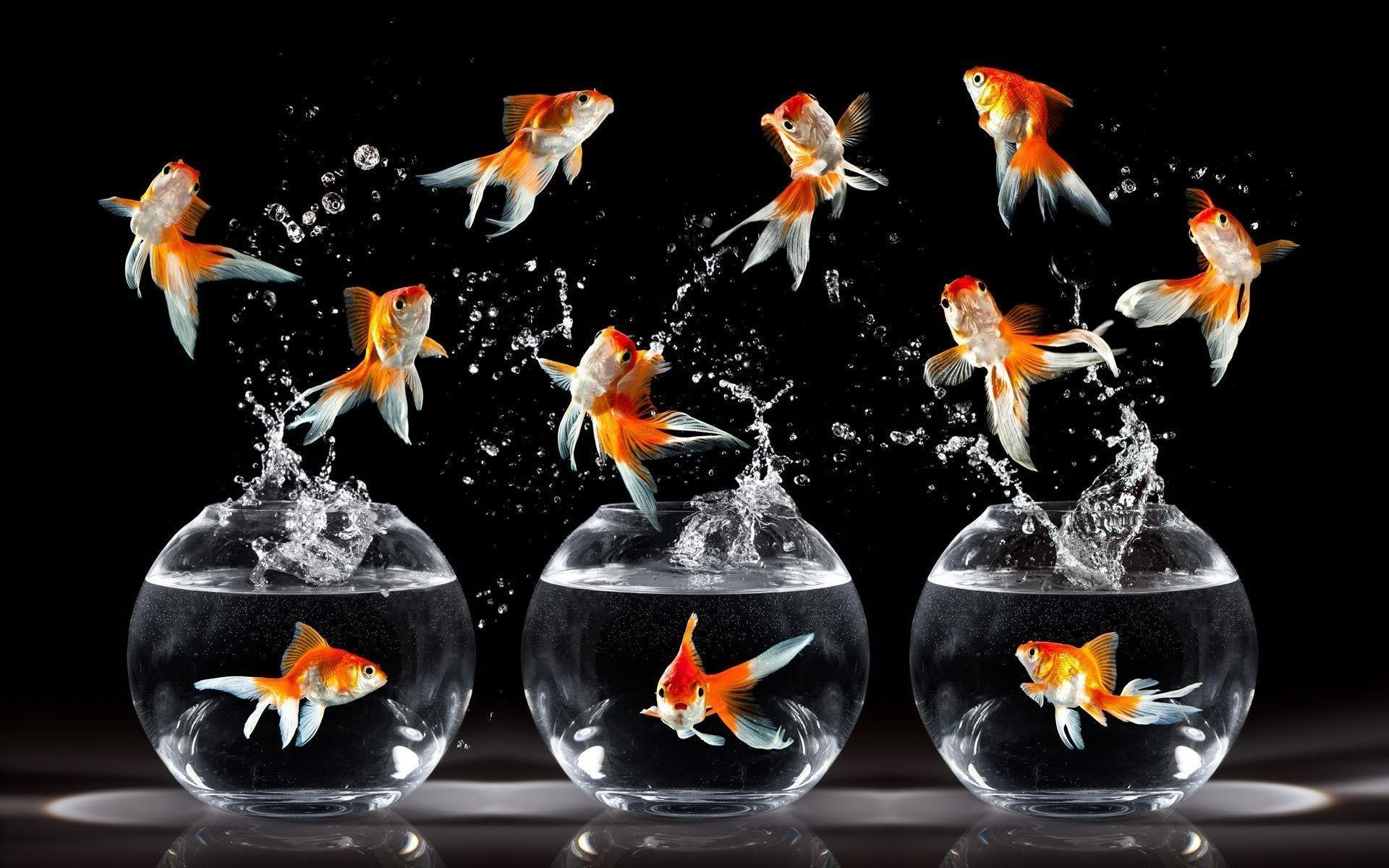Animals For > Goldfish Wallpapers
