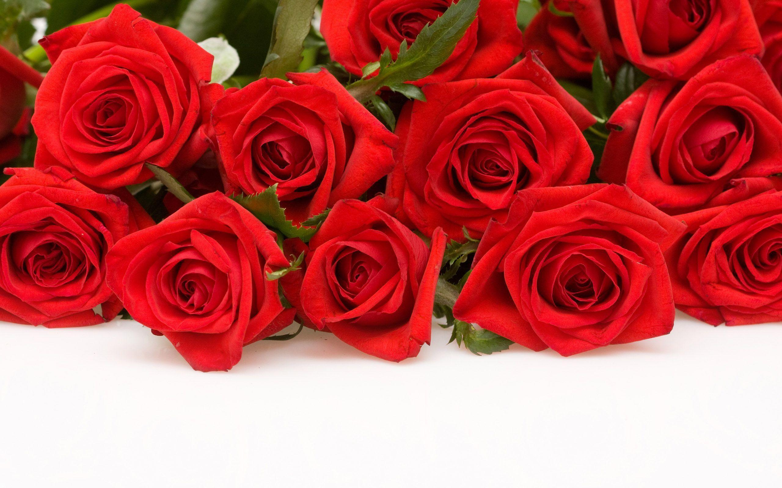 Red Roses Wallpaper | Wallpaper Color