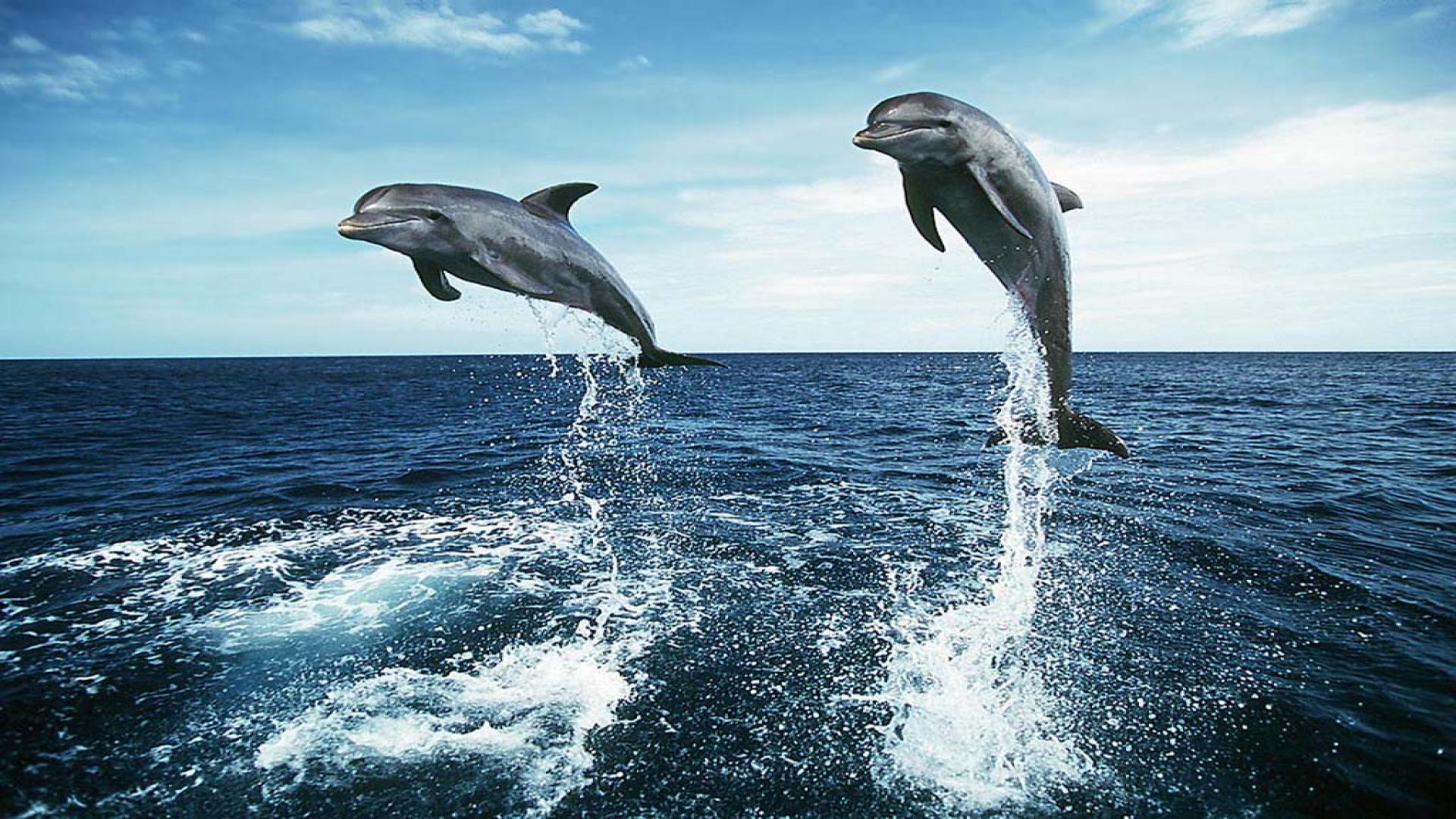 Dolphin Jumping HD Wallpapers - HD Wallpapers Inn