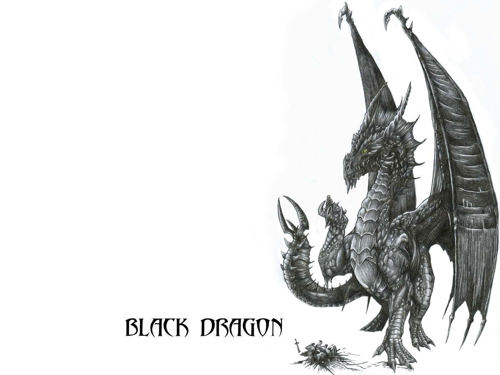 Wallpapers For > White And Black Dragons Wallpapers